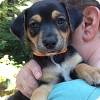 Adopt A Pet :: Reggie - Adoption Pending - Gig Harbor, WA