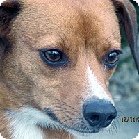 Adopt A Pet :: Willie - Germantown, MD