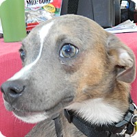 Adopt A Pet :: Stretch - Umatilla, FL