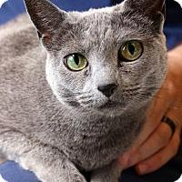 Adopt A Pet :: Remmie - Herndon, VA