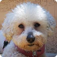 Adopt A Pet :: Edie - La Costa, CA
