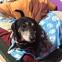 Adopt A Pet :: Delta - York, SC