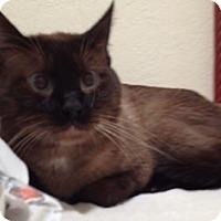 Adopt A Pet :: Chopstic - Orange, CA