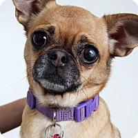 Adopt A Pet :: Taylor  D161522 - Edina, MN