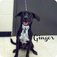 Adopt A Pet :: Ginger - Defiance, OH