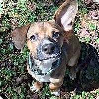 Adopt A Pet :: TACO - Barium Springs, NC