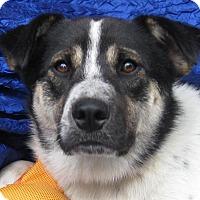 Adopt A Pet :: Dalton Lancer - Cuba, NY