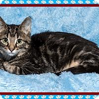 Adopt A Pet :: Charlie Brown - Mt. Prospect, IL