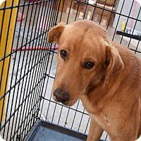 Golden Retriever Mix Dog for adoption in Newnan City, Georgia - Riley