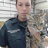 Adopt A Pet :: JINX - Tavares, FL