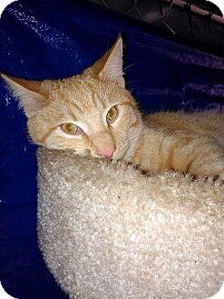 Adopt A Pet :: Max  - Snow Hill, NC