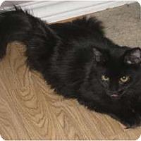Adopt A Pet :: Linus - Huffman, TX