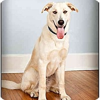 Adopt A Pet :: Pilot - Owensboro, KY