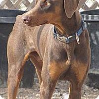 Adopt A Pet :: Armani - Fillmore, CA