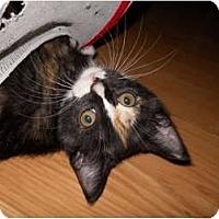 Adopt A Pet :: Grease Monkey - McDonough, GA