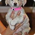 Adopt A Pet :: Butterbean von Bonn