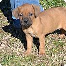 Adopt A Pet :: Clifford