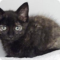 Adopt A Pet :: Roxy - Keokuk, IA