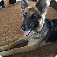 Adopt A Pet :: Midnight - Burlington, NJ