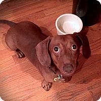 Adopt A Pet :: Hendrix - Decatur, GA