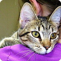 Adopt A Pet :: Savannah - Toledo, OH