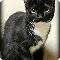 Adopt A Pet :: Mome - Spring, TX