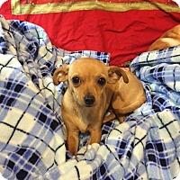 Adopt A Pet :: Gidget - Las Vegas, NV