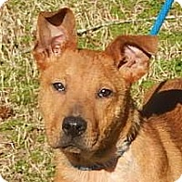 Adopt A Pet :: Zachary - Yardley, PA