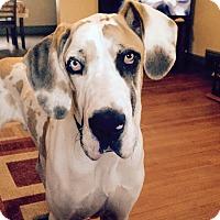 Adopt A Pet :: Odin - Manassas, VA