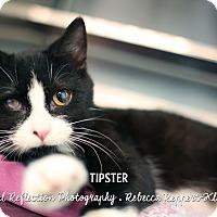 Adopt A Pet :: Tipster - Appleton, WI