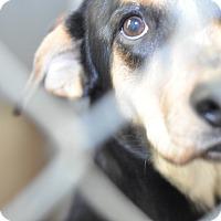 Adopt A Pet :: Remi - Gadsden, AL
