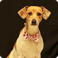 Adopt A Pet :: Faya - Twin Falls, ID