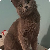 Adopt A Pet :: STORMY - Highland, IN