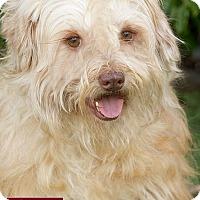 Adopt A Pet :: Squirt - Marina del Rey, CA