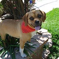 Adopt A Pet :: Akime - Corona, CA