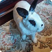 Adopt A Pet :: Ty - Conshohocken, PA