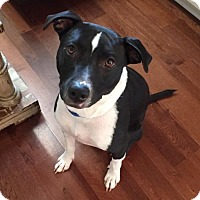 Adopt A Pet :: Stormy - Kennesaw, GA