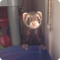 Adopt A Pet :: Toby - Navarre, FL