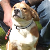Beagle Mix Dog for adoption in Cheboygan, Michigan - 20706