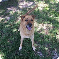 Adopt A Pet :: Gino - Ozark, AL