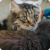 Adopt A Pet :: Geneva - Indianapolis, IN