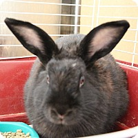 Adopt A Pet :: *LANA - Las Vegas, NV