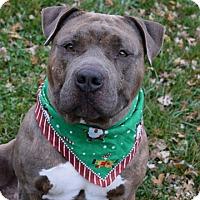 Adopt A Pet :: Jeremiah Bullfrog - Dublin, CA