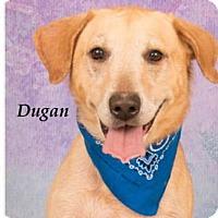 Adopt A Pet :: Dugan - Falls Church, VA