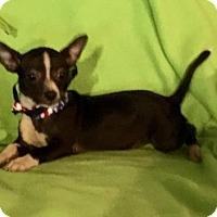 Adopt A Pet :: Basil - Texarkana, TX