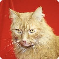 Adopt A Pet :: Smeigle - Jackson, MI