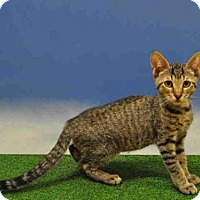 Adopt A Pet :: TYE - Naples, FL