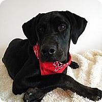 Adopt A Pet :: Ryker - Monteregie, QC