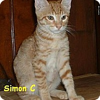 Adopt A Pet :: Simon C - Sacramento, CA