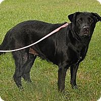 Adopt A Pet :: Anna - Bryan, TX